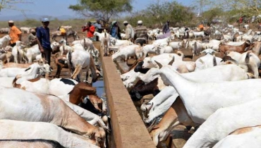 IEBC says drought cause of low voter listing in Marsabit County